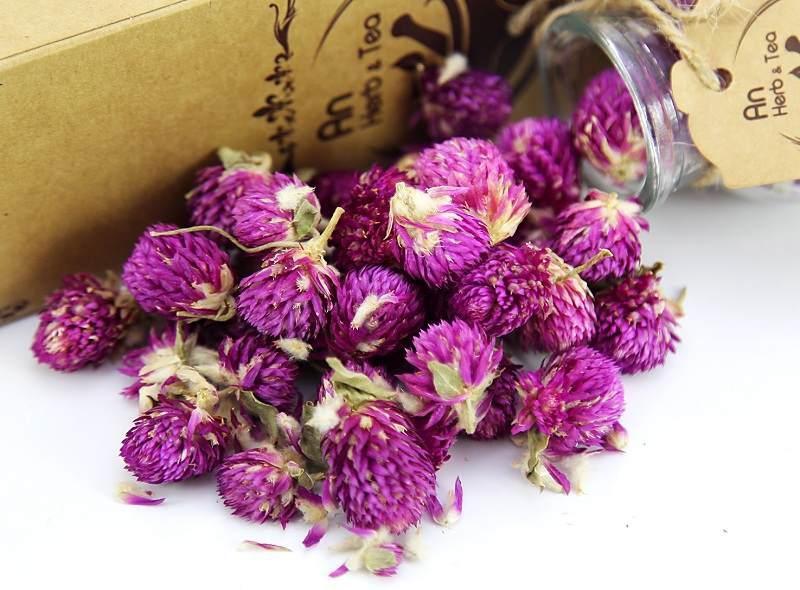 Thuốc điều trị viêm vùng chậu từ trà hoa cúc tím