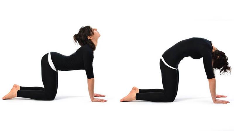 Bài tập chữa gai cột sống - yoga tư thế con mèo