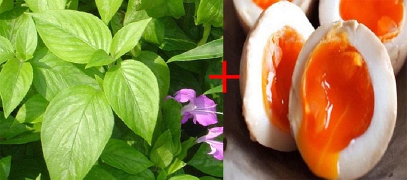 Bài thuốc chữa gai cột sống từ cây lá cẩm và trứng gà ta
