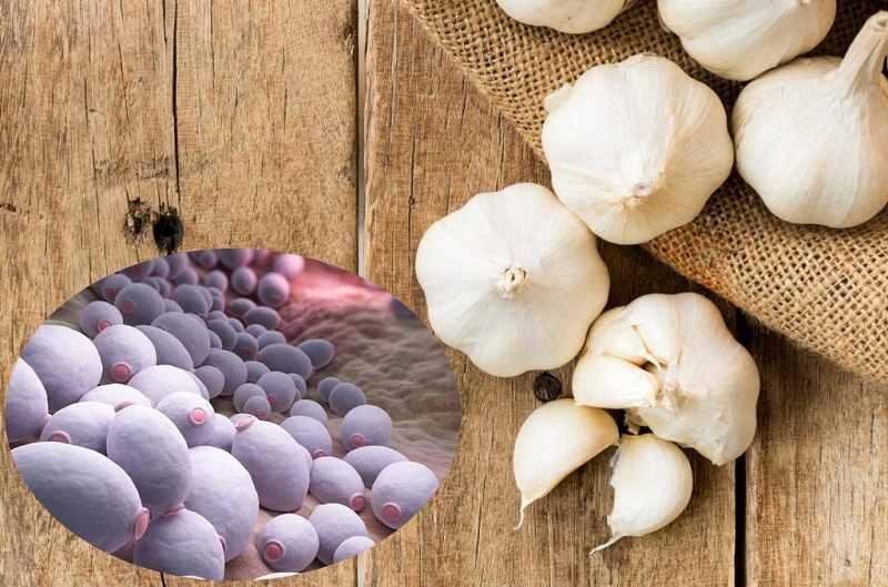 Chữa nấm Candida bằng tỏi đúng cách như thế nào?