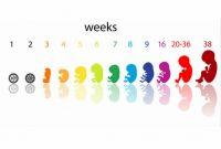 Có thể tính tuổi thai IVF theo tuần