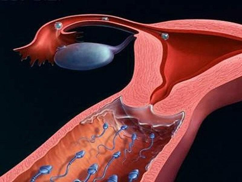 Đàn ông phải tạo ra tinh trùng thường xuyên trong cuộc đời họ