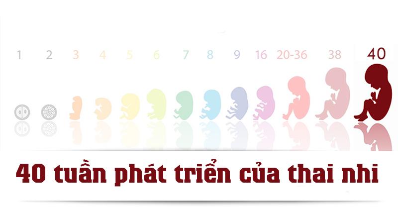 Khi có thai 2 tuần, kích thước thai nhi còn rất nhỏ, chỉ bằng một hạt giống