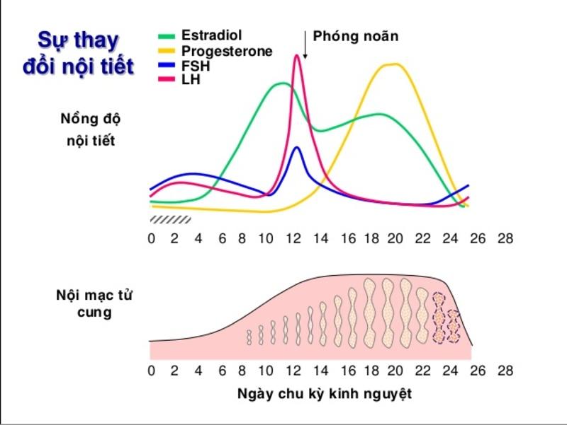 Khi trứng rụng, hormone ở phụ nữ thay đổi