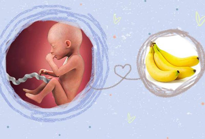Mang thai tháng thứ 5, thai có chiều dài tương đương 1 quả chuối lớn