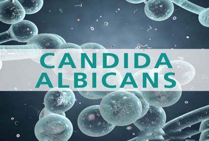 Nấm Candida albicans