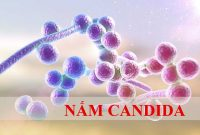 Nấm Candida
