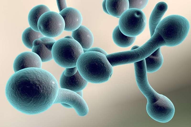 Nấm Candida albicans là gì?