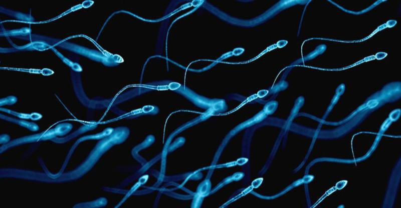 Phương pháp Ericsson lựa chọn tinh trùng bơi nhanh nhất để thụ tinh con trai
