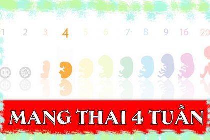 Thai 4 tuần tuổi có kích thước bao nhiêu