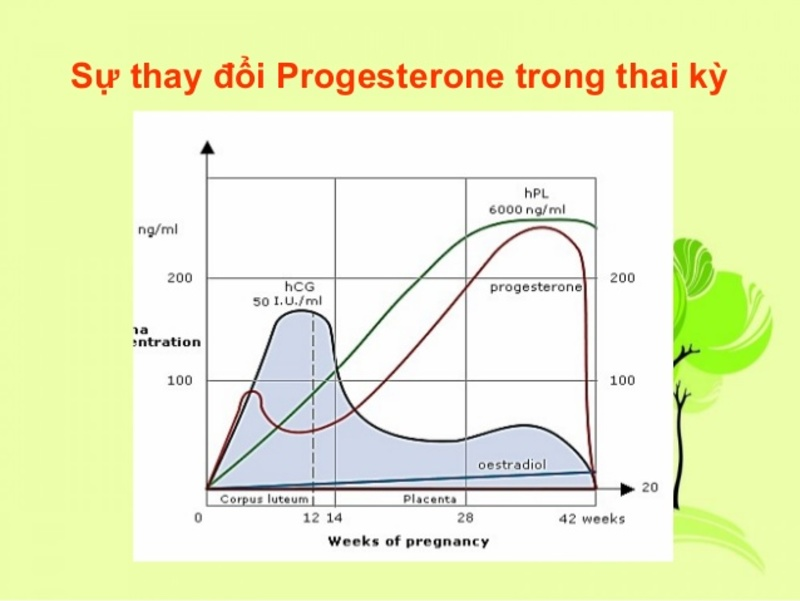Thay đổi hormone có thể dẫn tới đau lưng khi mới thụ thai