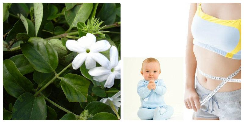 Giảm cân là một tác dụng của chè vằn với phụ nữ sau sinh