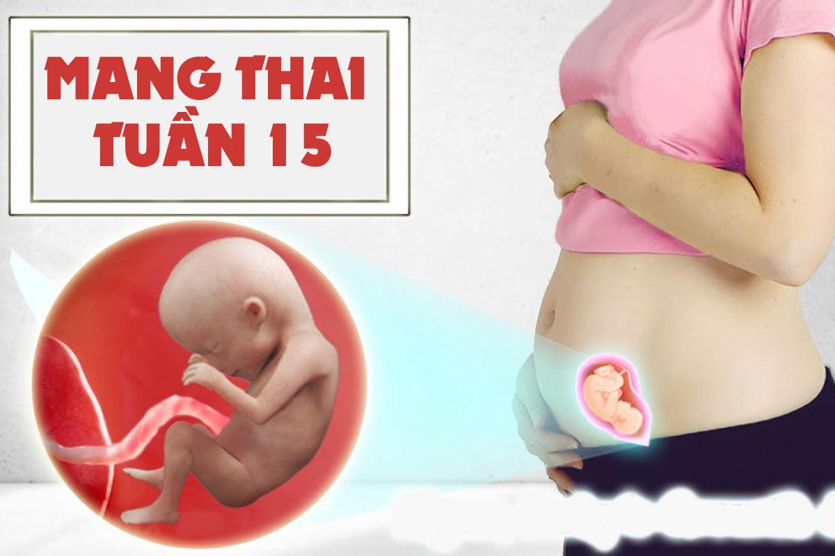 Mang thai tuần 15
