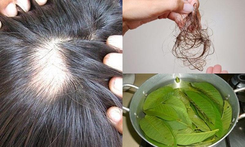 Lá có tác dụng điều trị chứng rụng tóc, ngăn ngừa hói đầu