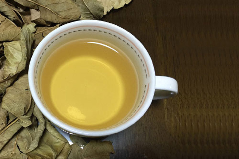 Lá phơi khô, nghiền nát thành bột để pha trà
