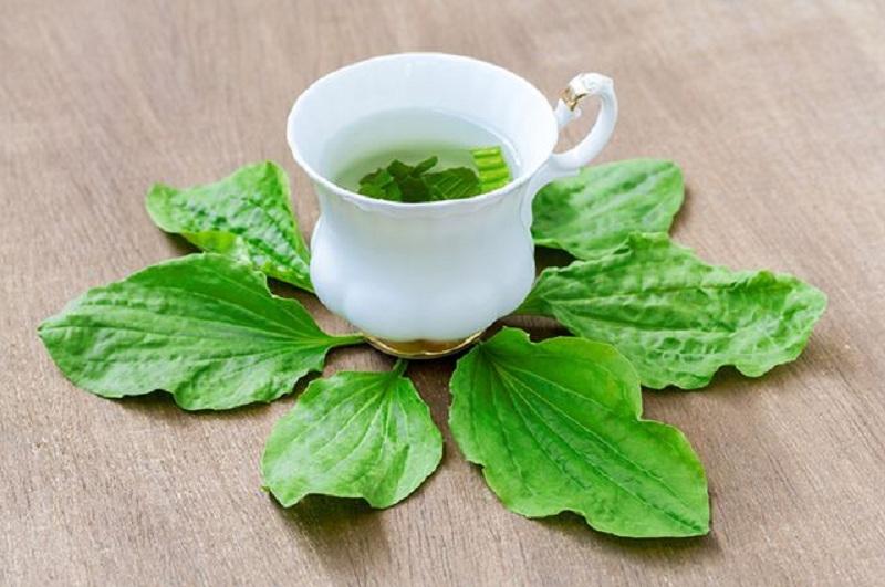 Uống nước sắc cây mã đề giúp chữa mụn do nóng trong hiệu quả